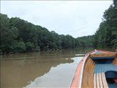 On Sungai Brunei looking for proboscis monkeys.: by steve_and_emma, Views[690]