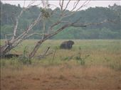 A lonely elephant who has survived the war in Wilpatu National Park.: by steve_and_emma, Views[494]