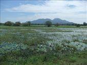 Stunning Sri Lankan scenery on the road from Anuradhapura to Sigiriya.: by steve_and_emma, Views[686]