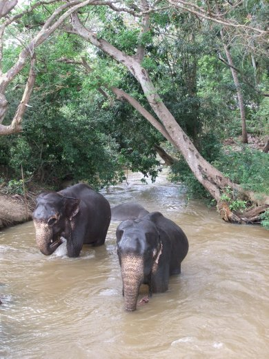 Elephant bath time at Sigiriya.
