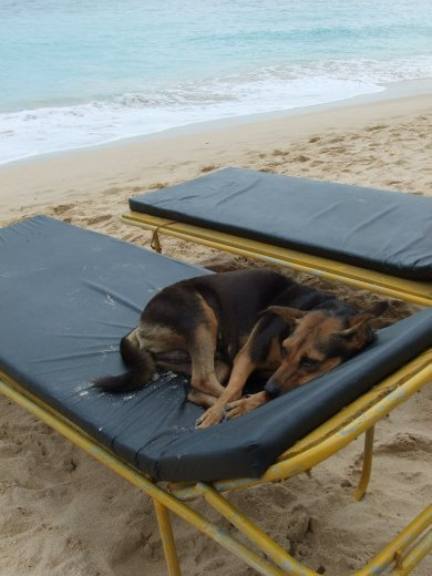 Let sleeping dogs lie, Hard to get a lounger at Unawatuna.
