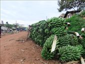 Rwaihamba village gearing up for market day, wonder what will be on offer?: by steve_and_emma, Views[342]