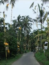 The local villagers had decorated the road leading to the village with offerings galore.: by steve_and_emma, Views[188]