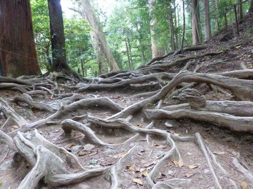 The walk from Kurama-dera to Kibune is beautiful and my favourite thing in Kyoto.