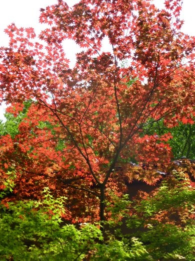 Although we were not there in the spring or autumn, there were still some colourful trees.