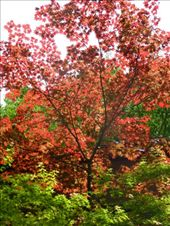 Although we were not there in the spring or autumn, there were still some colourful trees.: by steve_and_emma, Views[176]