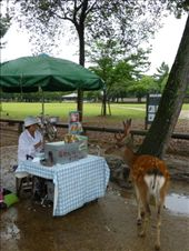 Best fed animals in Japan: by steve_and_emma, Views[191]