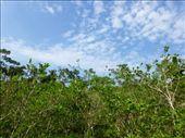 Coca plantation.: by steve_and_emma, Views[224]
