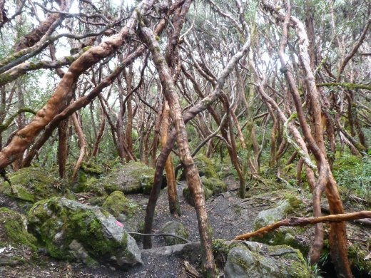 A 'walking forest'.