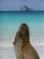 A sea lion with Kicker Rock in the background.: by steve_and_emma, Views[210]