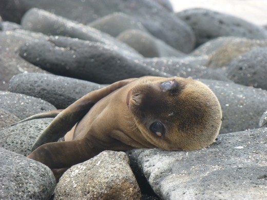 The sea lions looked as sad as us when we left the Galapagos.