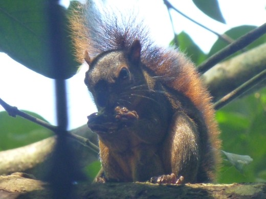 A squirrel (just in case Janette is looking at this without Mike's help).