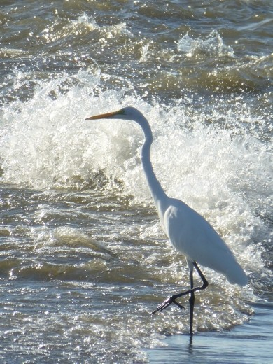 So does an egret.