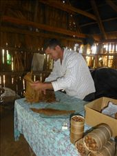 We learnt how to make cigars.: by steve_and_emma, Views[219]