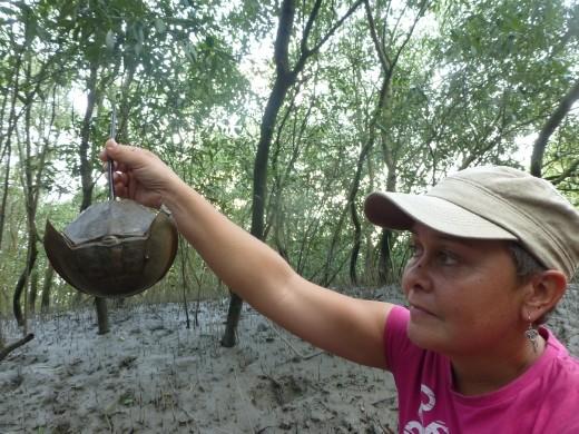 Emma with a horseshoe crab.
