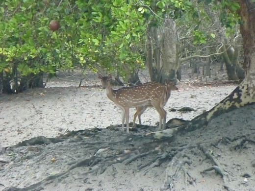 Spotted deer were about the only wildlife we saw.