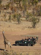 The park was busier than those in Malawi but not over run with jeeps like Kenya and Tanzania.: by steve_and_emma, Views[147]