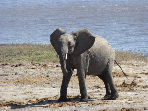 And many more inside Chobe NP.