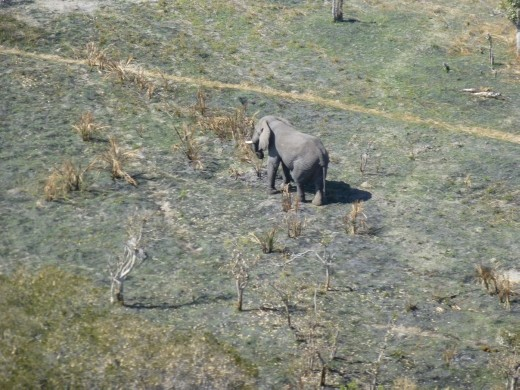 Spotting wildlife from a chopper was a new experience for us.
