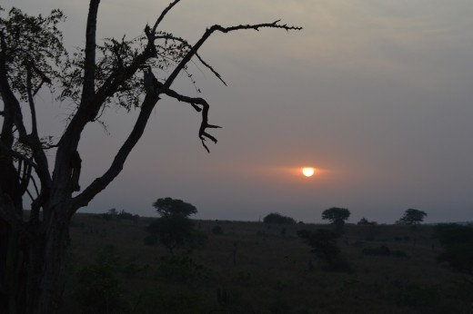 Sunrise on a morning game drive in Murchison.