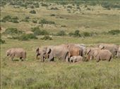 We must have seen about 200 elephants in one day in Addo.: by steve_and_emma, Views[156]