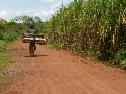 You have to find your way through the sugar cane to find the forest but their are signs.