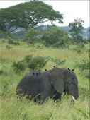 We spotted this chap outside Murchison NP near our digs at Fort Murchison.: by steve_and_emma, Views[177]