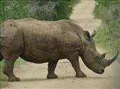 More rhinos than people!: by steve_and_emma, Views[167]