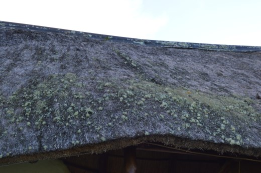 As you can see we were cultivating a nice eco-roof garden, erm we needed a new roof!