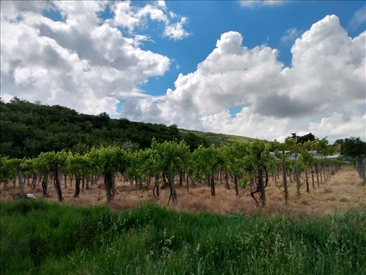 There are quite a few vineyards around Paulis.