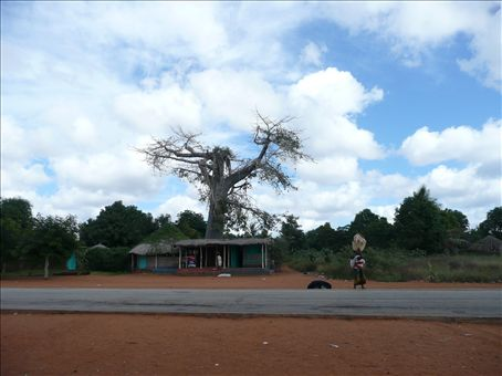 baobabs are dominating the landscape
