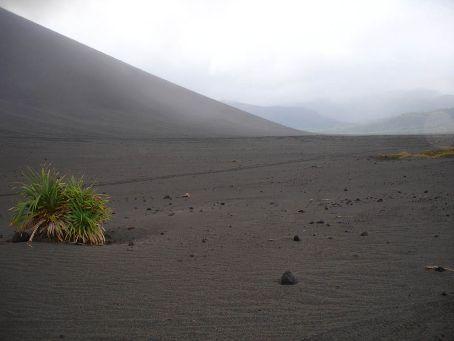 Lonely vegetation on the ash-plain of Yassur Volcano