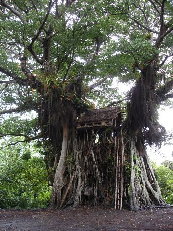 TreeHouse, Yakel village, Tanna Island