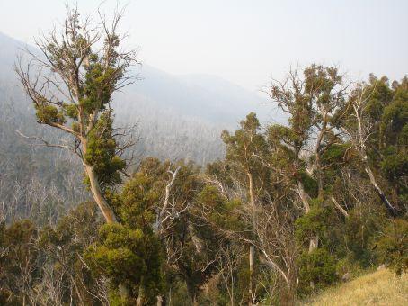 bushfire smoke in the snowy mts