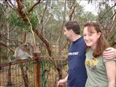 Us & a Koala, Philip Island, Vic: by stowaway, Views[563]