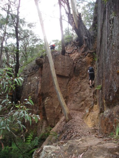Part 3 of cliff climb out, using conveniently grown tree roots.