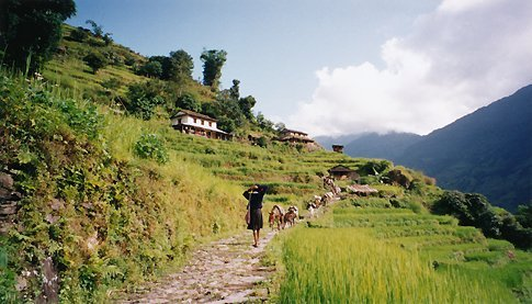 On Annapurna trek