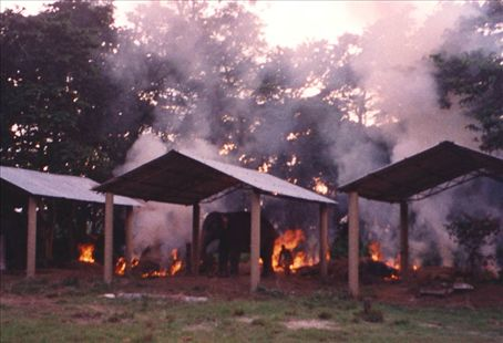 Burning Elelphant dung (not the Elephants themselves) in Chitwan