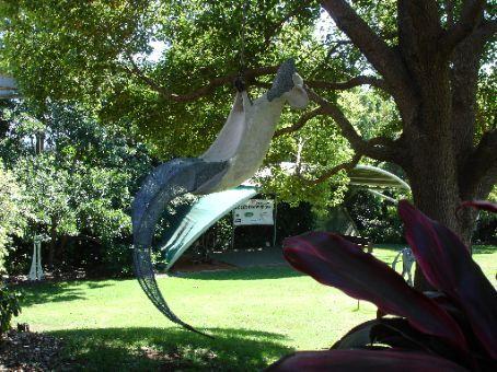 Playing possum, Thurday Tea Tree Plantation, Ballina, NSW
