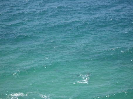 Dolphins at Byron Bay Lighthouse