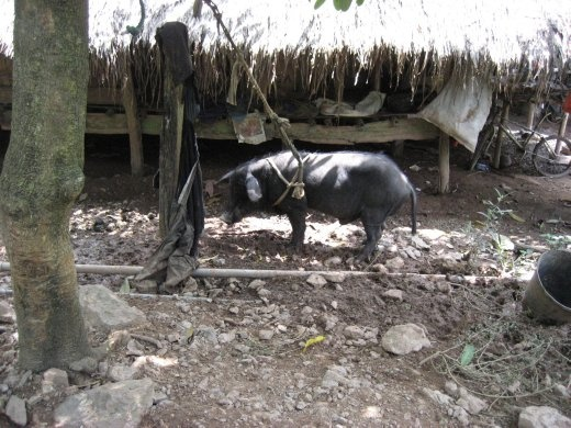 The locals live closely with their livestock