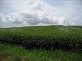 Tea plantation: by supergg, Views[138]