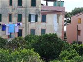 Lemon trees in Monterosso: by supergg, Views[49]