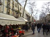Flower stall in La Rambla: by supergg, Views[76]