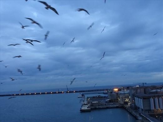 Ciao Genoa