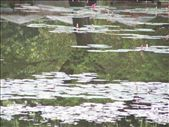 Tree reflecting in Lotus pond, Angkor Wat: by susanandsarahdoasia, Views[161]
