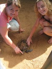 Eleanor and Steph giving a turtle a good scrubbing with sand. : by susannah_palk, Views[130]