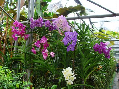Besuch auf einer Orchideenfarm!