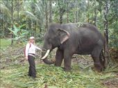 Elephantencenter in Thekkady!: by suse, Views[184]