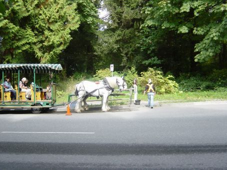 horse drawn carriages around stanley park